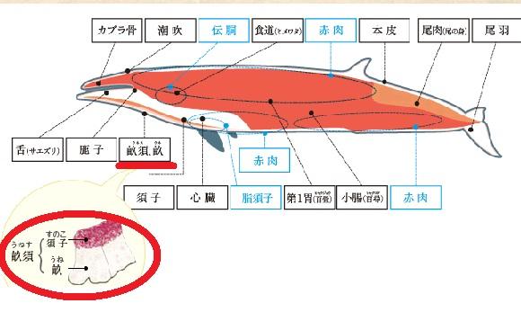 鯨肉図鑑.jpg